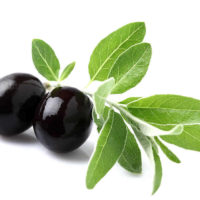 olive-leaves
