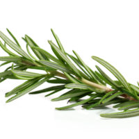 Branch of rosemary